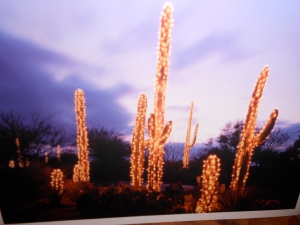 December card with lighted trees,  Tucson, AZ